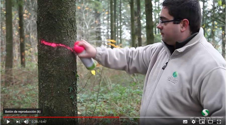 Video Spray de pintura forestal fluorescente FLUO MARKER SOPPEC